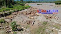 Gelondongan Kayu Jadi Panorama Amukan Sungai Boyantongo