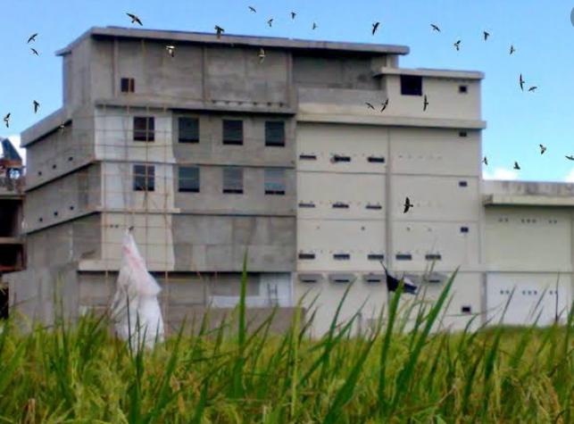 Sarang burung walet (ilustrasi)